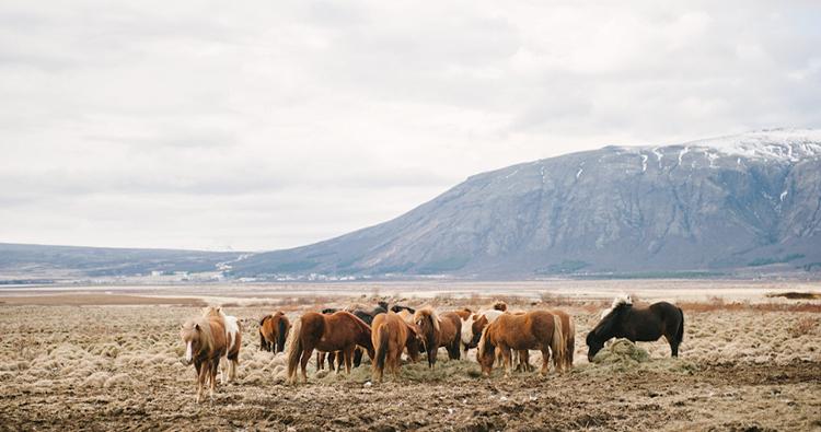 mini-guide-Iceland-FI12