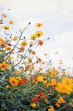flower-crown55