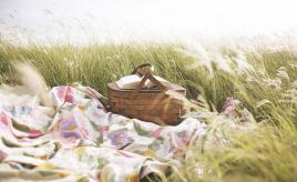 summer-picnic-FI01