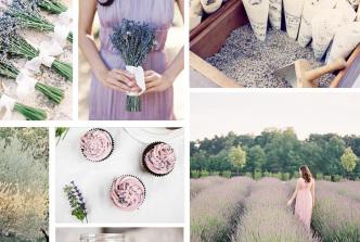color-story-lavender-FI3