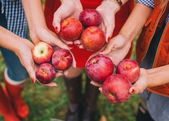 apple-picking-FI